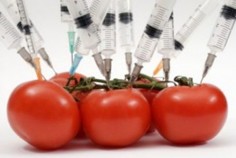 genetically-modified-food-tomatoes-syringes-photo_compressed